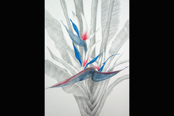 Tuttle White Bird of Paradise, Sea Grape Gallery
