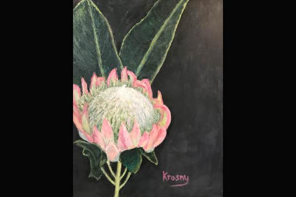 Krasny Protea, Sea Grape Gallery