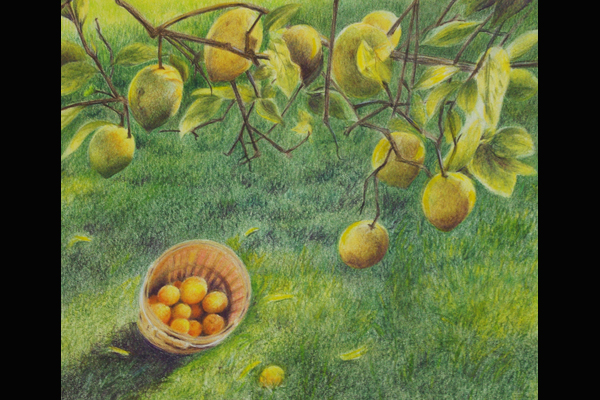 Tuttle Lemon Harvest, Sea Grape Gallery. 15 x 17
