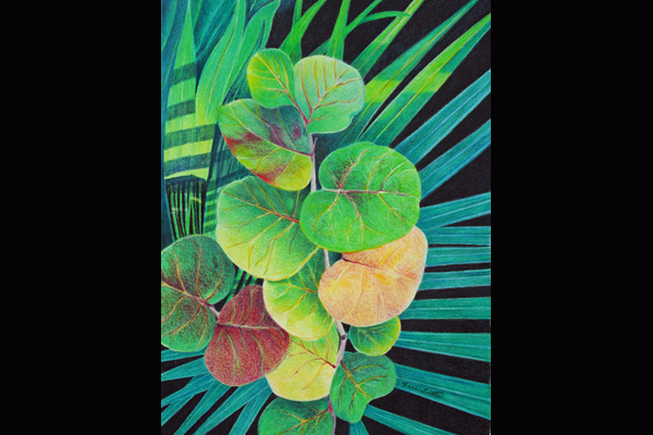 nne Tuttle, Garden Shadows, Colored Pencil, 16x29 framed, Sea Grape Gallery